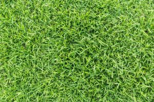 How to Properly Lay Artificial Grass Over Dirt