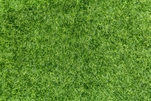 Artificial Grass Service Buda, TX