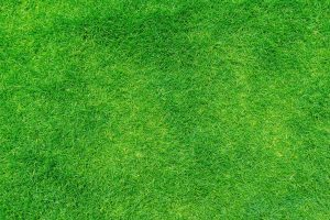 What's the Best Artificial Grass for Dogs
