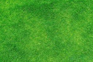 Can Artificial Grass Help Allergy Sufferers