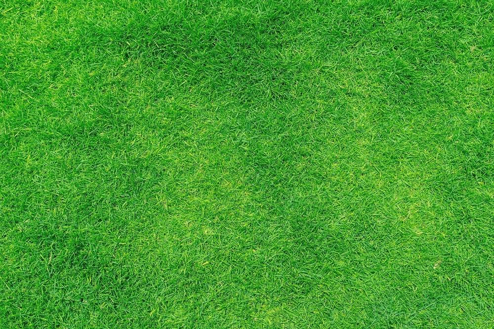 How Long Will Artificial Grass Last