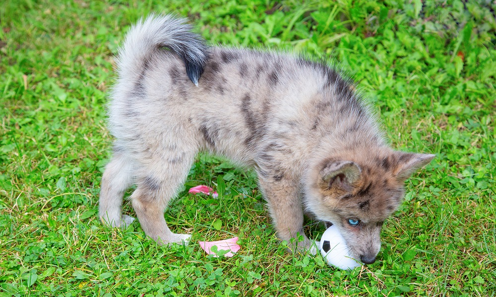 How to Stop Dog From Eating Artificial Grass